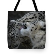 Snow Leopards Tote Bag