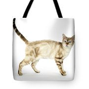Snow Marble Bengal Cat Tote Bag