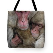 Snow Monkey And Young Tote Bag
