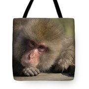 Snow Monkeys-just Hanging Out Tote Bag