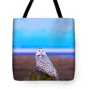 Snow Owl At Sunset Tote Bag