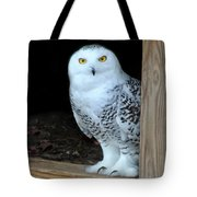Snow Owl Tote Bag