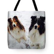 Snow Shelties Tote Bag