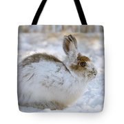 Snowshoe Hare In Winter Tote Bag