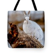 Snowshoe Hare Pictures 131 Tote Bag