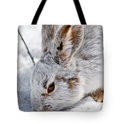 Snowshoe Hare Pictures 133 Tote Bag