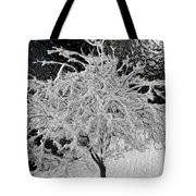 Snowy Branches In Darkness Tote Bag