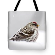 Snowy Common Redpoll Tote Bag