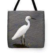 Snowy Egret  Egretta Thula Tote Bag