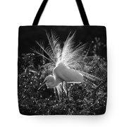 Snowy Egret Tote Bag