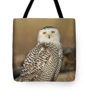Snowy Owl Female Tote Bag