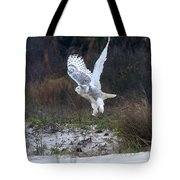 Snowy Owl In Florida 10 Tote Bag