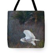 Snowy Owl In Florida 11 Tote Bag