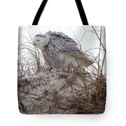 Snowy Owl In Florida 13 Tote Bag