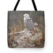 Snowy Owl In Florida 14 Tote Bag