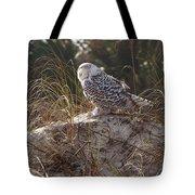 Snowy Owl In Florida 15 Tote Bag