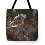 Snowy Owl In Florida 16 Tote Bag
