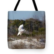 Snowy Owl In Florida 19 Tote Bag