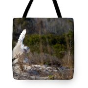 Snowy Owl In Florida 20 Tote Bag
