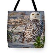 Snowy Owl In Florida 24 Tote Bag