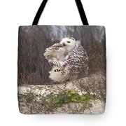 Snowy Owl In Florida 4 Tote Bag