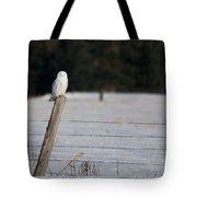 Snowy Owl Landscape Tote Bag