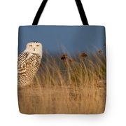 Snowy Owl Morning Tote Bag