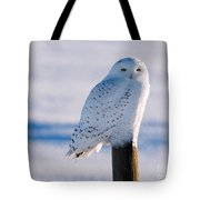 Snowy Owl On A Post Tote Bag