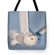Snowy Owl Pictures 47 Tote Bag