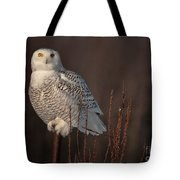 Snowy Owl Pictures 64 Tote Bag