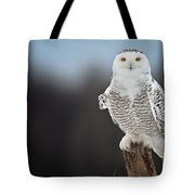 Snowy Owl Pictures 69 Tote Bag