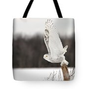 Snowy Owl Pictures 80 Tote Bag