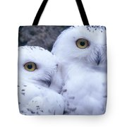 Snowy Owls Tote Bag