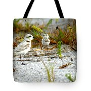 Snowy Plover And Chick Tote Bag