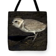Snowy Plover Tote Bag