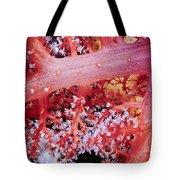 Soft Corals 2 Tote Bag