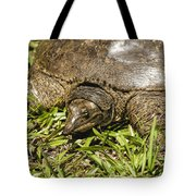 Florida Soft Shelled Turtle - Apalone Ferox Tote Bag