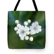 Soft Hawthorn Tote Bag