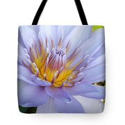 Soft Mauve Waterlily Tote Bag