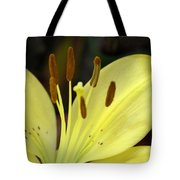 Softly Golden Tote Bag