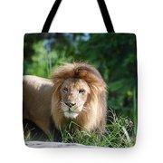 Solemn Lion Tote Bag