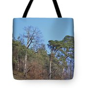 Solid Ground Tote Bag