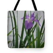 Solo Iris Tote Bag