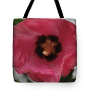 Solo Rose Of Sharon Tote Bag