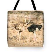 Somali Ostriches Kissing Tote Bag