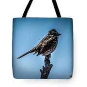 Song Sparrow On Top Of Branch Tote Bag
