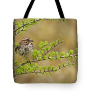 Song Sparrow Pictures 111 Tote Bag
