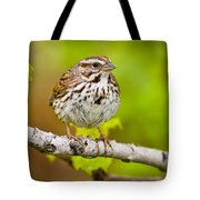 Song Sparrow Pictures 132 Tote Bag