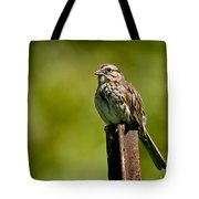 Song Sparrow Pictures 135 Tote Bag