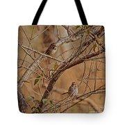 Song Sparrows Tote Bag
